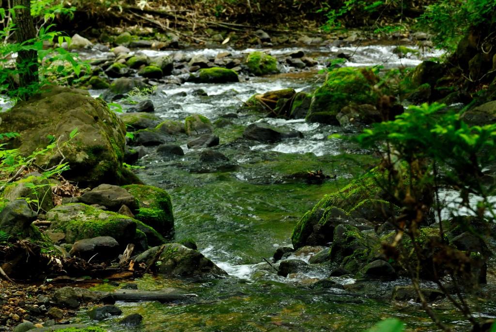琴似発寒川と宮城沢川の合流点