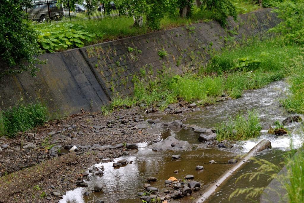 精進川と精進川放水路の分流点
