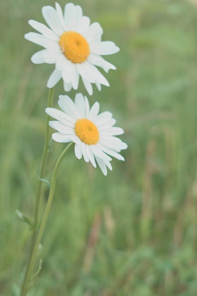 庭とかでもよく見かける花