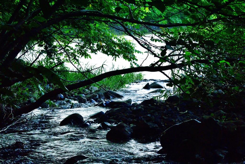 豊平川と観音沢川の合流点