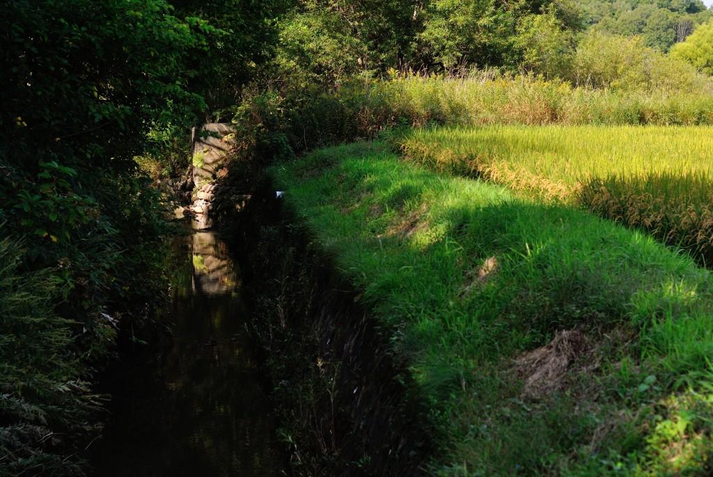野津幌川と農場川の合流点