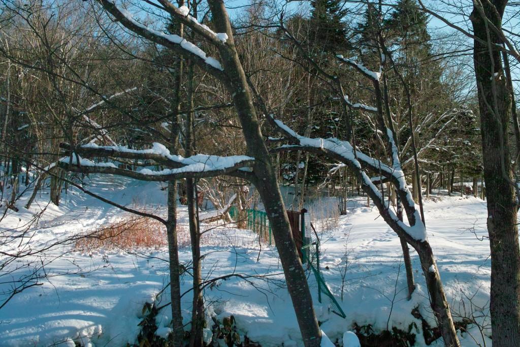 西岡焼山下山