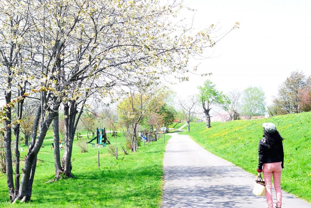 皆楽公園の桜