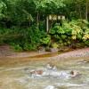 厚別川トンボ池
