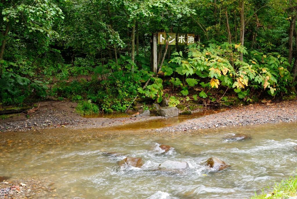 厚別川緑地トンボ池
